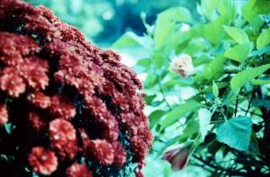flora3especially-nice1